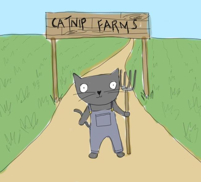 duncan_catnip.jpg